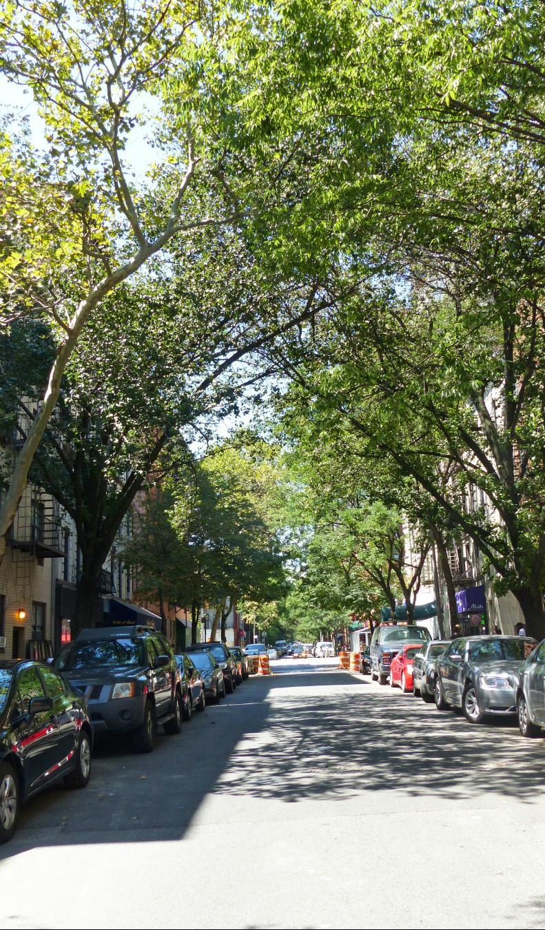 E. 78th Street (Tree-Lined Block)