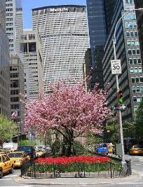 38th & Park Avenue